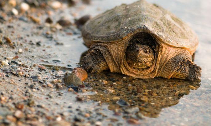 ВСША педагог скормил черепахе живого щенка— Ихнравы