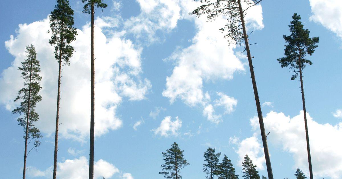 Rõuge vallas raiuti ebaseaduslikult puid