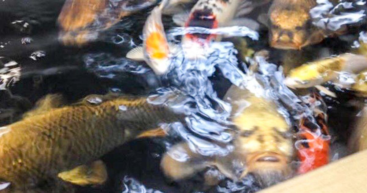 Video: järves ujuv inimese näoga kala on tekitanud sotsiaalmeedias ärevust