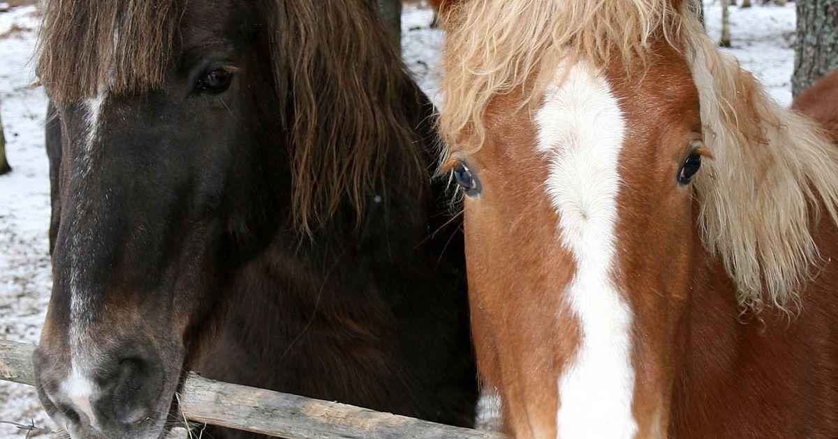 Ettevaatust: Varja ja Aa vahel võib hobune teele joosta