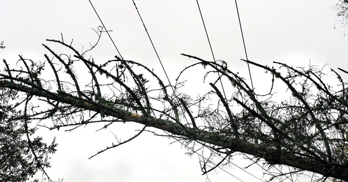 Elektrikaablile langenud puu läks kärssama