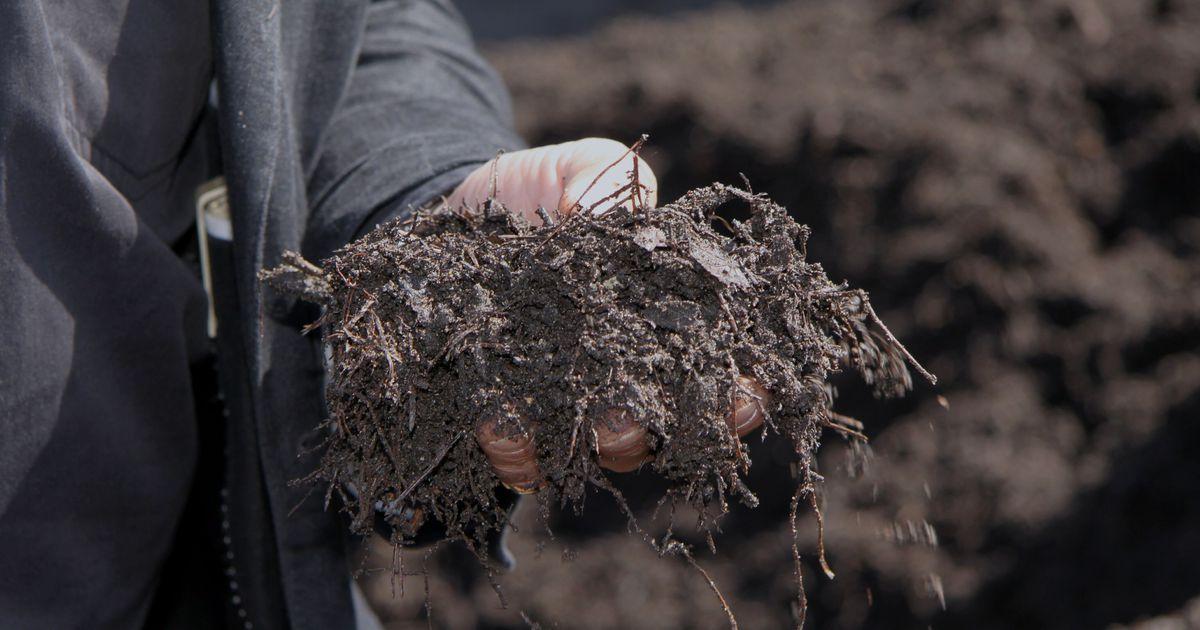 Pealinlased õpivad kompostima