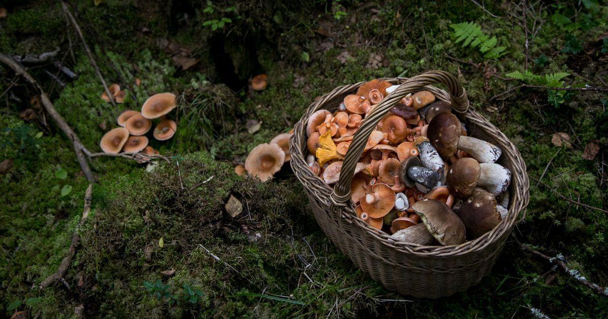 Фото в лес за грибами
