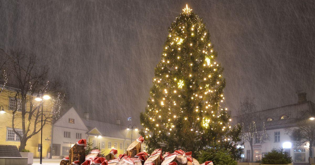 Saaremaa joogitootja villib Helsingi jõulukuuse pudelisse