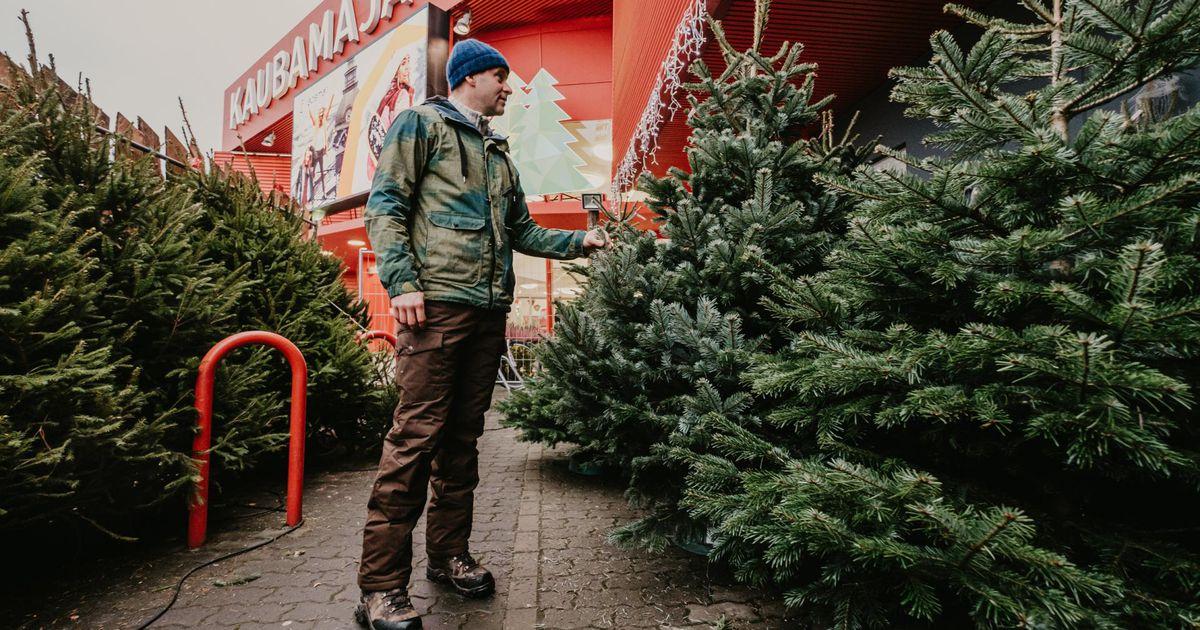 Jõulupuude müük kogub hoogu
