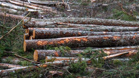 Puiduettevõtete juhid: puidu hind jääb stabiilselt kõrgeks