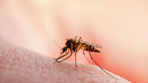 Sääsed võivad levitada mitmeid haiguseid.