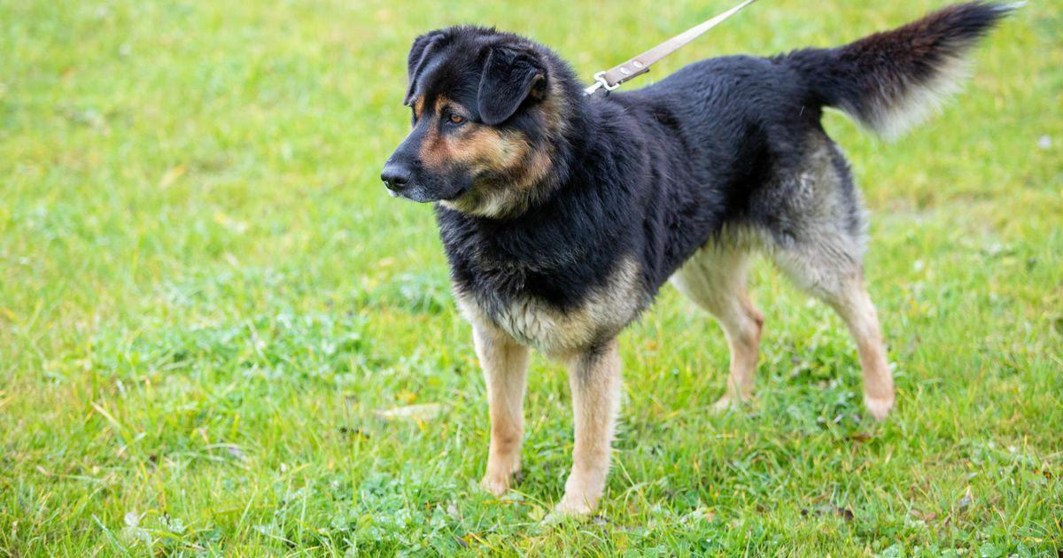 Sakalas avaldatud lugu juhatas omaniku kolm kuud kadunud koerani