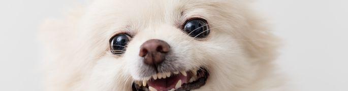 828f37d7839 W3 uudised - Loomaarst vastab: kuidas koera haukumist ohjeldada?