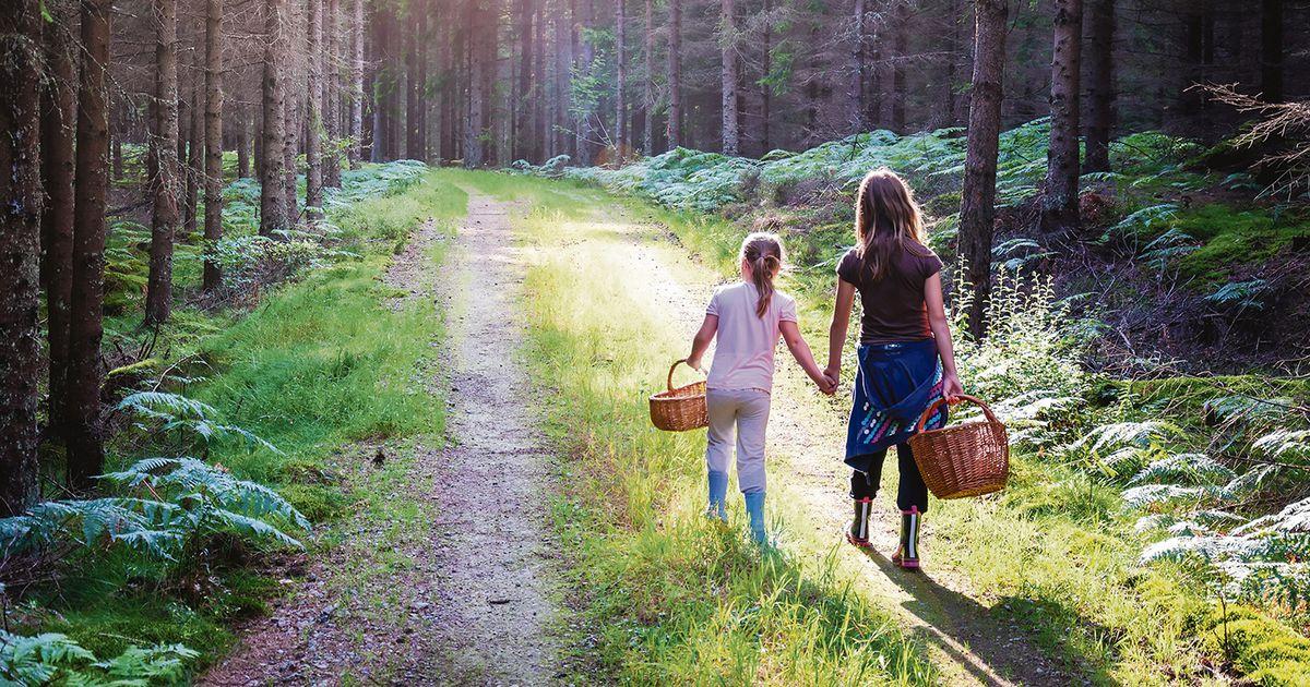 Korvid ja kummikud tasub metsa minekuks välja otsida