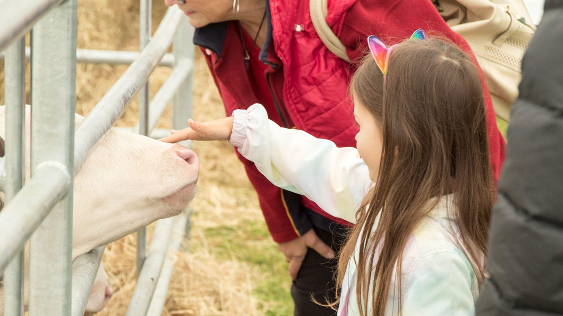 Luige näituslaada avapäev pakkus põnevaid maitseid ja võimalust uudistada taluloomi
