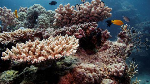 Ametnikud: merevee temperatuuri tõus kahjustab Suurt Vallrahu