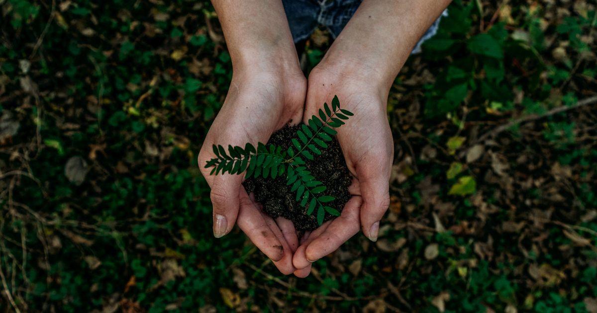 Saarte noored on oodatud keskkonnaprogrammi