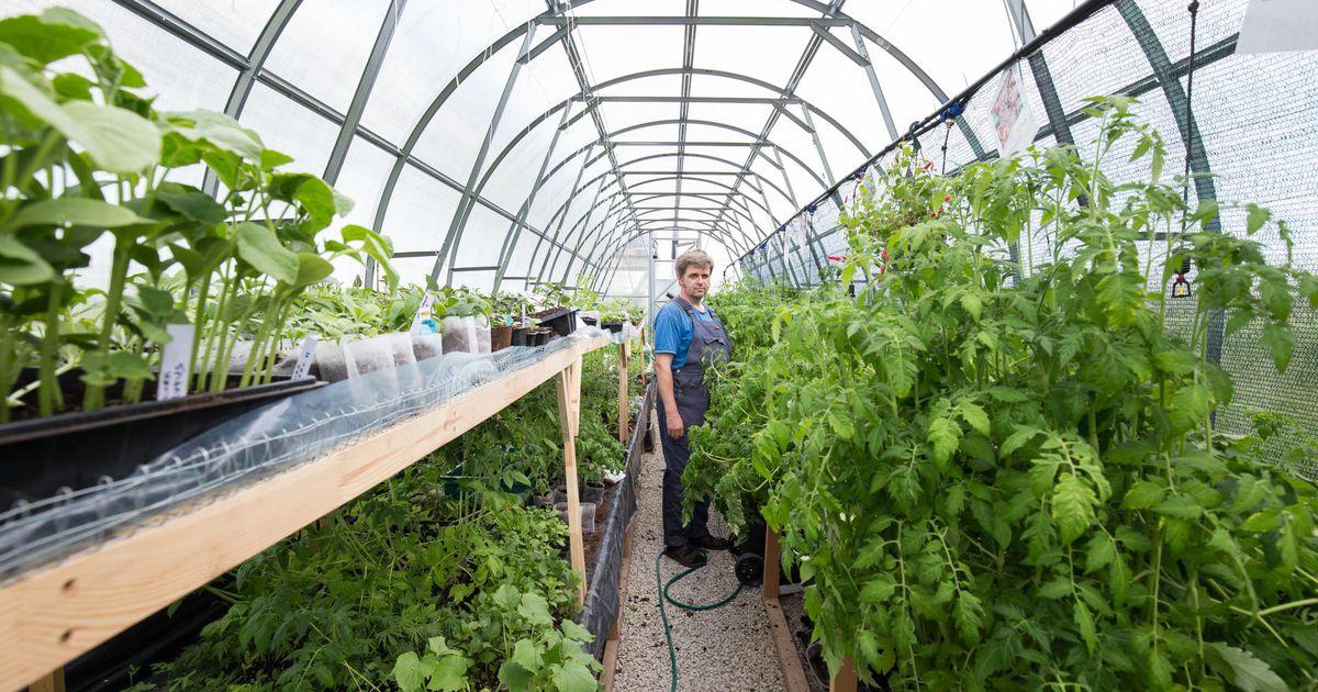 Parim taimekasvataja pälvib tunnustuse