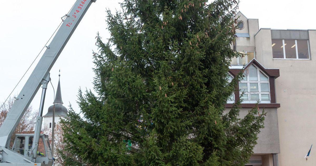 Nädala puu. Jõulukuusk Mataperast