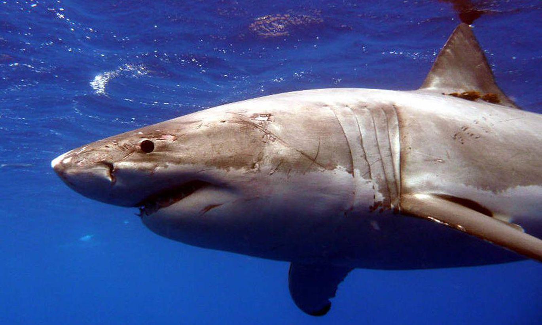 фотографии, представленные акулы смотреть фото правило