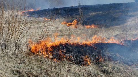 Kõima külas põles kolmel hektraril kulu