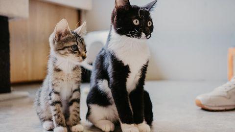 Lemmikloomadel esinevad oma koroonaviirused