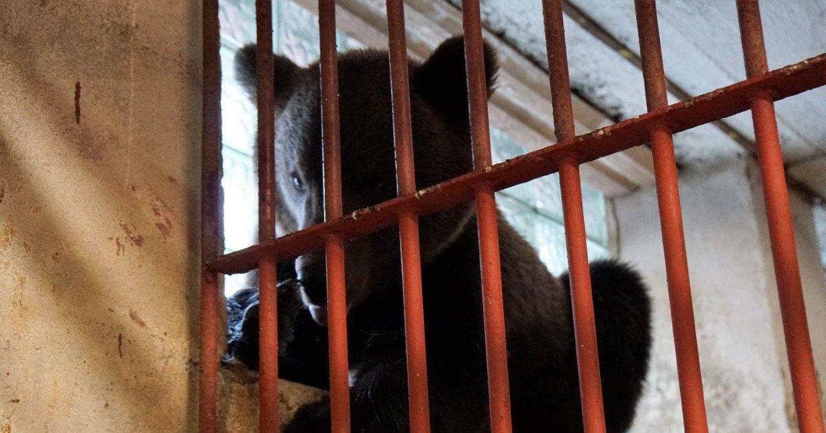 Karu Proša võib Venemaale naasta järgmisel nädalal