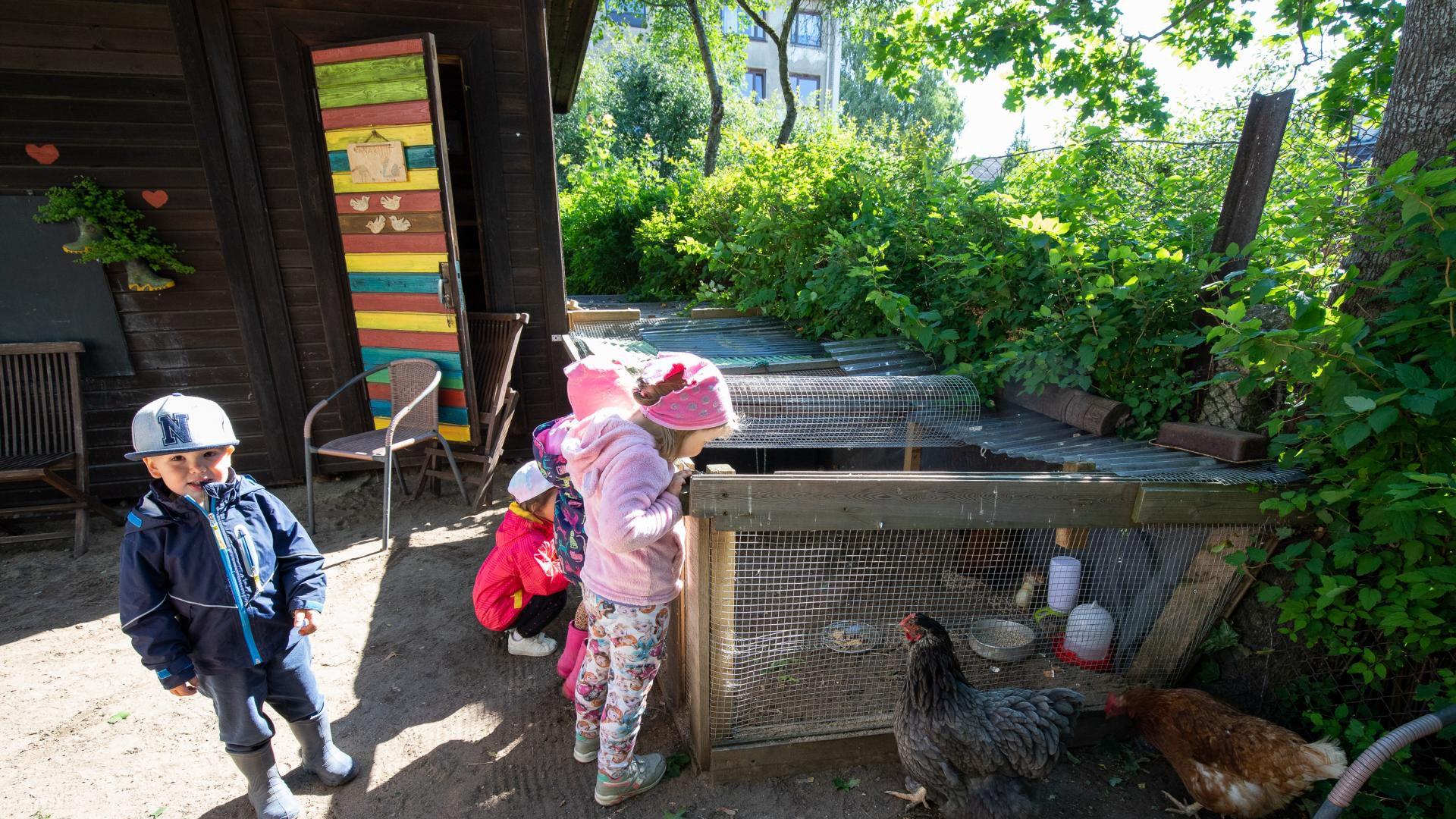 Maahommik püüdis lindile kanade elu lasteaias