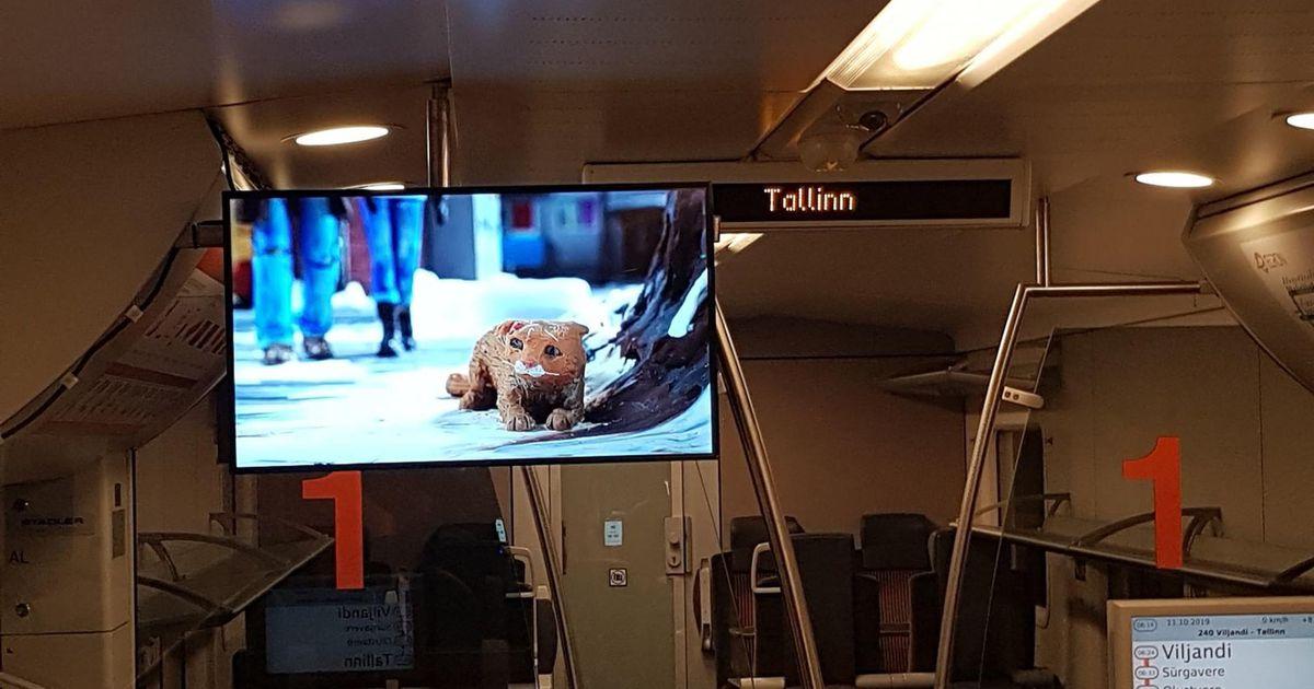 Rongis näeb multifilme